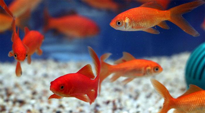 Por la carta de desdido muere el pez. Foto: Neptuno.
